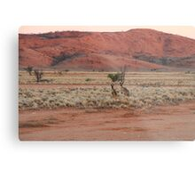 Two Kangaroos Metal Print