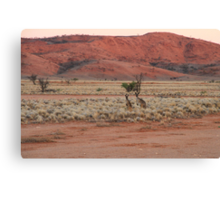 Two Kangaroos Canvas Print