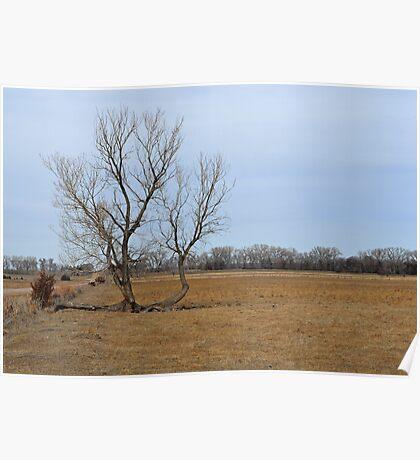 Tree Alive Poster
