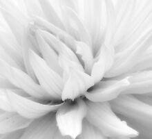 softest of bloom~ by Brandi Burdick