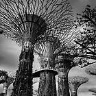 Supertrees by serialninja