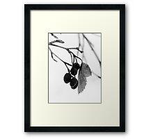 solace~  Framed Print