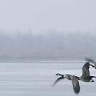 Canada Geese by Jean Martin
