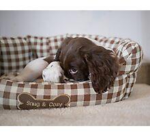 Snug and cosy Photographic Print