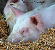 Little Piggies by KarenDinan