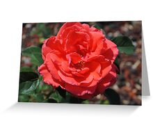 The beauty of a rose! Greeting Card