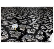 Dried up River Bed and flower Poster