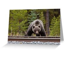 Wild Grizzly Bear near Lake Louise Alberta Canada Greeting Card