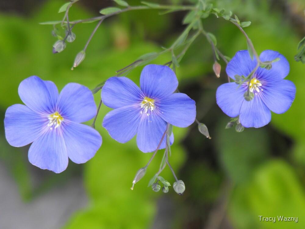 Wild Blue Flax by Tracy Wazny
