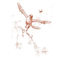 Bug Chasing Archaeopteryx Photographic Print
