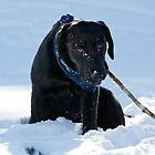 Black dog in the snow by Greg  Walker
