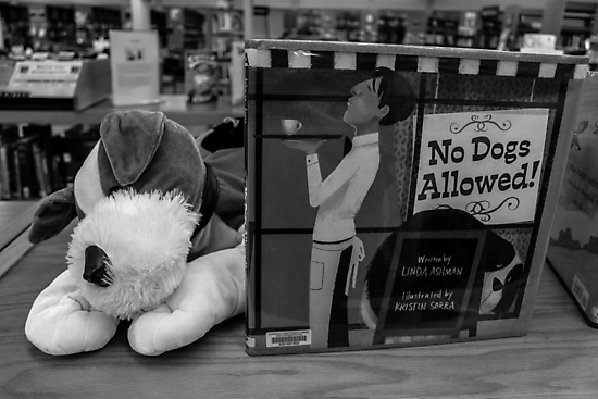 No Dogs Allowed by Nevermind the Camera Photography