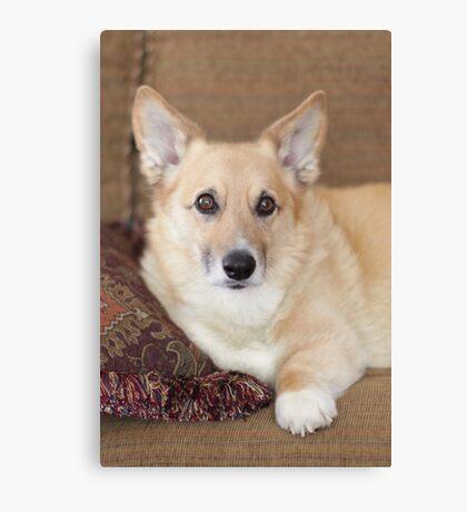 Kabo On His Pretty Sofa ~ Canvas Print