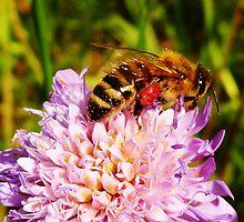 Bee life by Marina Kropec