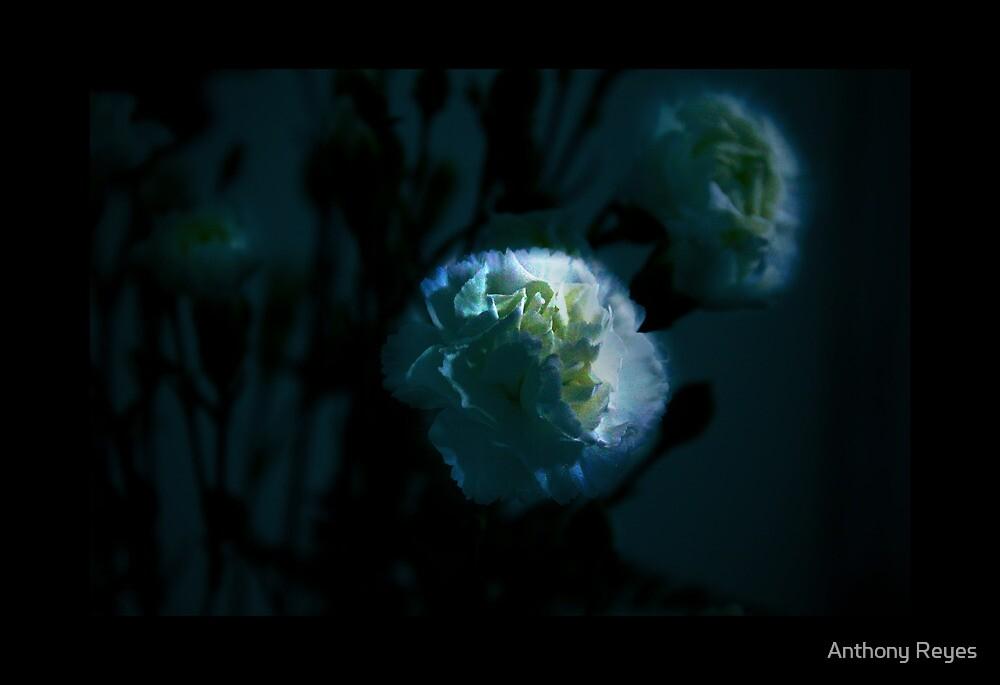 White Flower by Anthony Reyes
