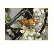 Butterfly Drinks Art Print