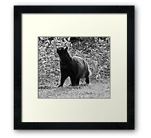 Mysterious kitty luck Framed Print