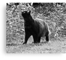 Mysterious kitty luck Canvas Print