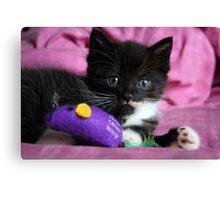 Cute kitten Canvas Print