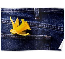 Daffodil and Blue Jeans studio shot with lighting Poster