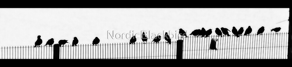 starlings in stereo by NordicBlackbird