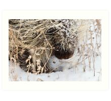 Porcupine in Winter Saskatchewan Canada snow and cold Art Print