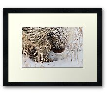 Porcupine in Winter Saskatchewan Canada snow and cold Framed Print