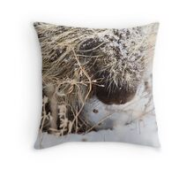Porcupine in Winter Saskatchewan Canada snow and cold Throw Pillow