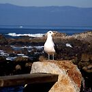 Hello Gull by lickthecowhappy