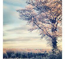 Crystal Tree Photographic Print