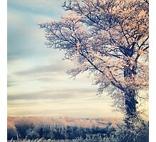 Crystal Tree Photographic Print