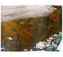 Trees in the waters of fall Poster
