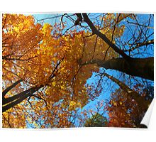 October brilliance Poster