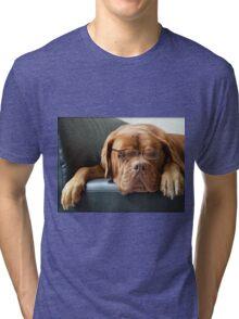 Bordeaux Dog Tri-blend T-Shirt