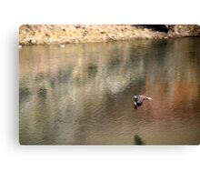 Bald eagle reflection in the pond,Reno NV Canvas Print
