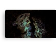 little sleepers Canvas Print