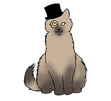 Tophat Cat Photographic Print
