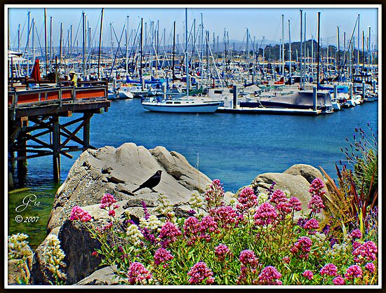 """Monterey Bay Marina"" by Gail Jones"