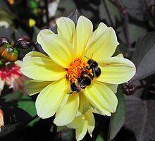 Summer Buzz by Dawn B Davies-McIninch