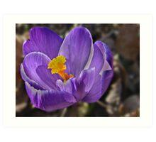 """ The Hope That Spring Brings "" Art Print"