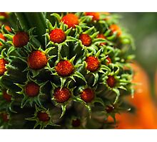Bright and fuzzy buds Photographic Print