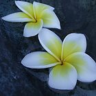 Floating Frangipani Flowers by SezziT