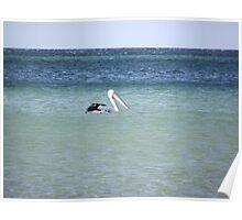 Pelican Paradise Poster