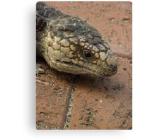 Blue Tongue Lizard, up close and personal! Canvas Print
