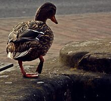 Duck walking by eternaldawn
