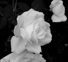 A Rose By Any Other Name by Kitrina Arbuckle