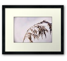 Diamond in the rough Framed Print