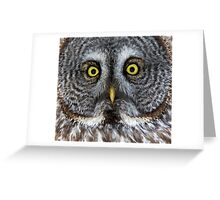 Great Gray Owl Detail Greeting Card