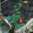 Forest Jewel by Debbie Oppermann
