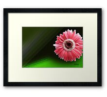 Daisy on Display Framed Print